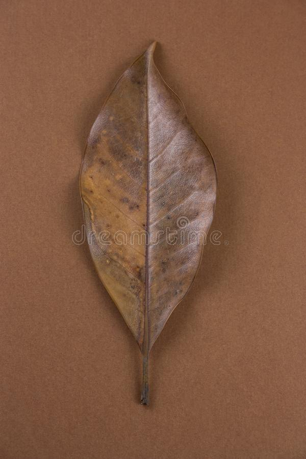 Single dried brown leaf stock photography