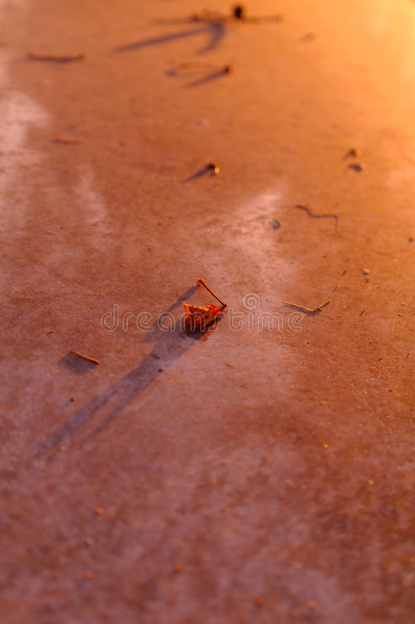 Single dried leaf on the marble royalty free stock photography