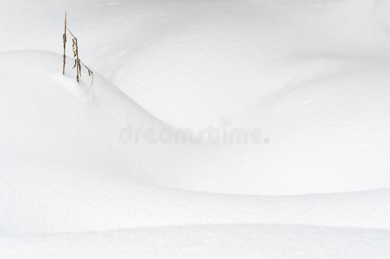 Dried stalk coming out of snow. A single dried plant stalk coming out of snow deep snow dunes royalty free stock photos