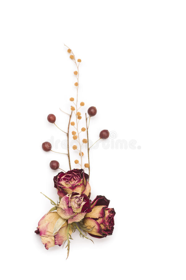 Single dried red rose over the white isolated background royalty free stock photo