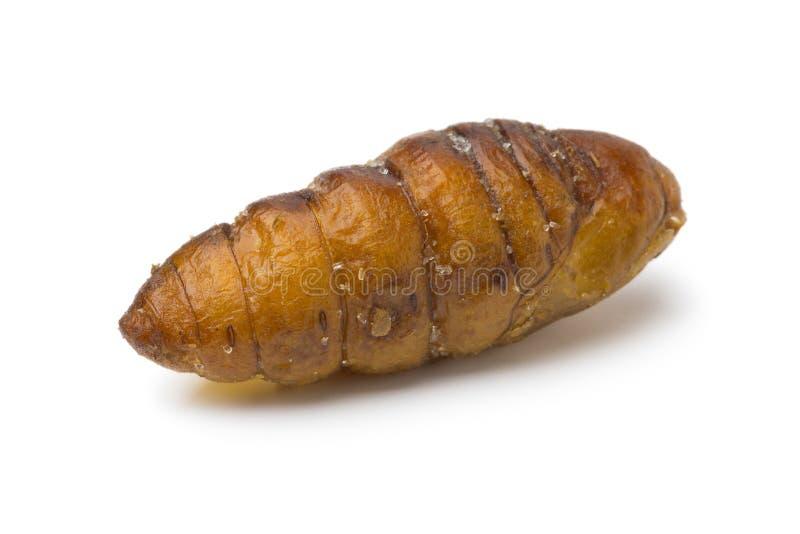 Single dried salted crispy silkworm royalty free stock photo