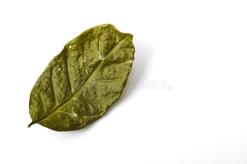 Single dry green leaf leaf royalty free stock photography
