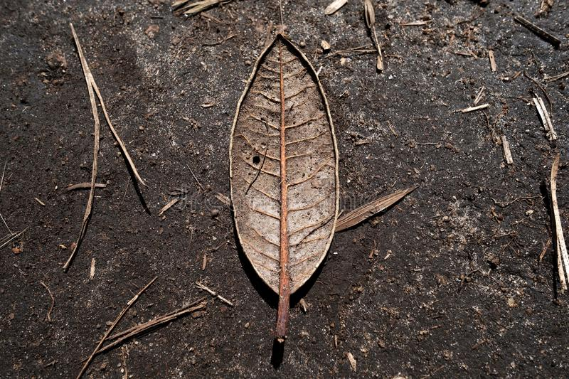 Single dry leaf of tree on brown ground as sign of autumn stock photography