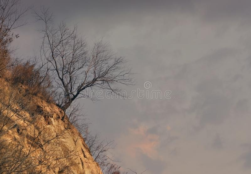 Single dry tree. On the hill. Late evening in north of China stock photography