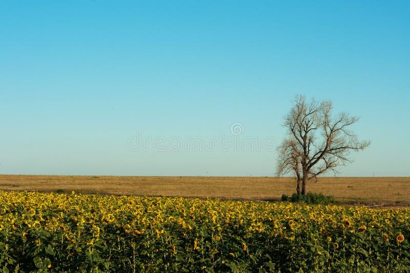 Single dry tree royalty free stock image