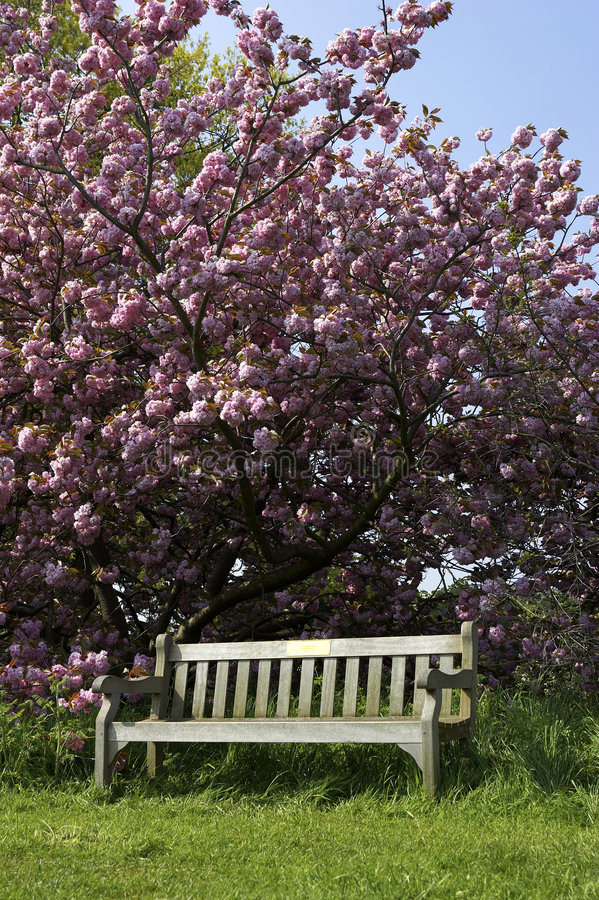 Free Single Empty Park Bench Royalty Free Stock Images - 203519