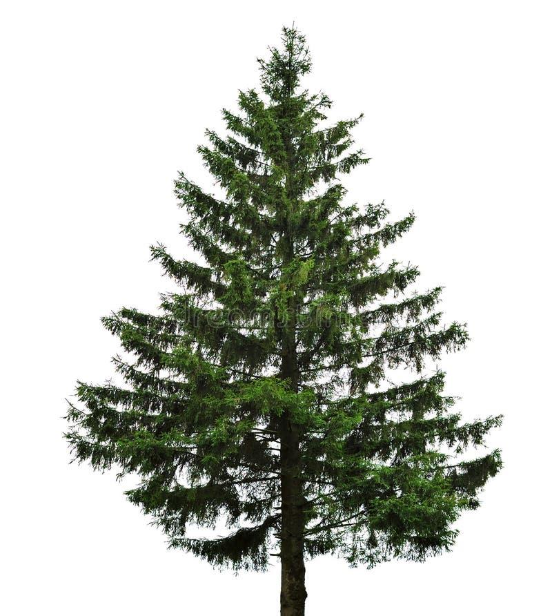 Christian dating fir free