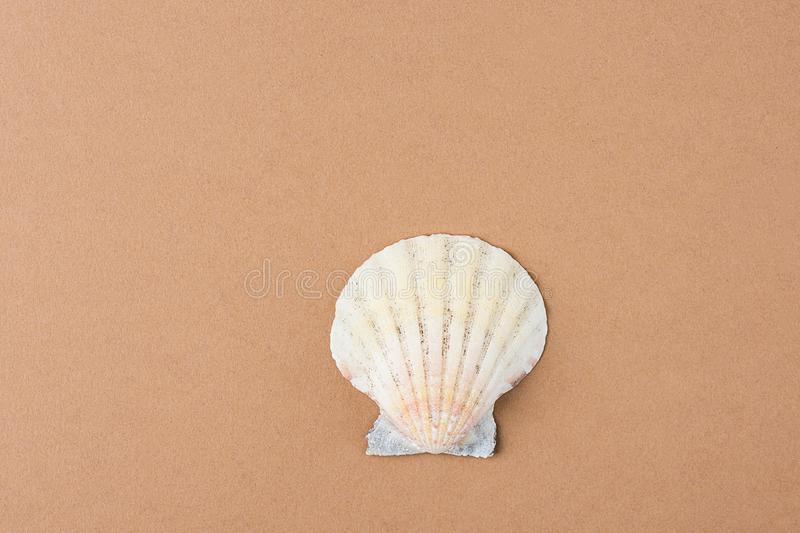 Single Flat Semi Circle Sea Shell on Coffee Color Brown Background. Minimalist Modern Style. Funky Trendy Colors. Template for Pos stock image
