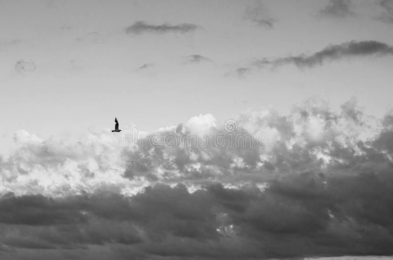 Single flying seagull side view in picturesque cloudy sky. Lonely bird is flying high in heaven with fluffy clouds. Gorgeous cloudscape above sea water royalty free stock photo