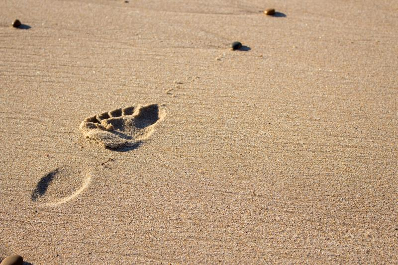 Single footprint on sand. Human footstep at seaside. Beach vacation. Leisure and travel concept. royalty free stock image