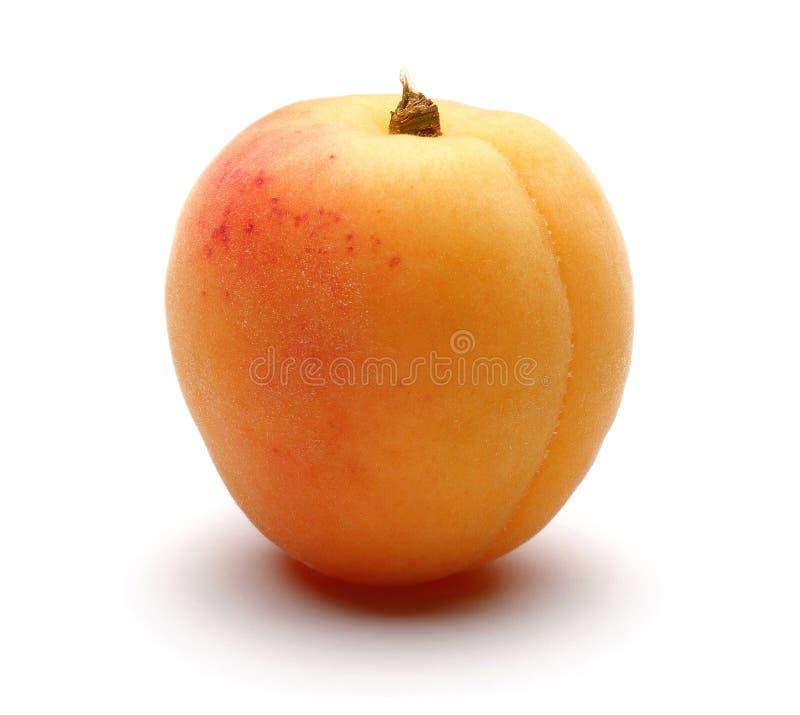 Single fresh apricot isolated on white royalty free stock photo