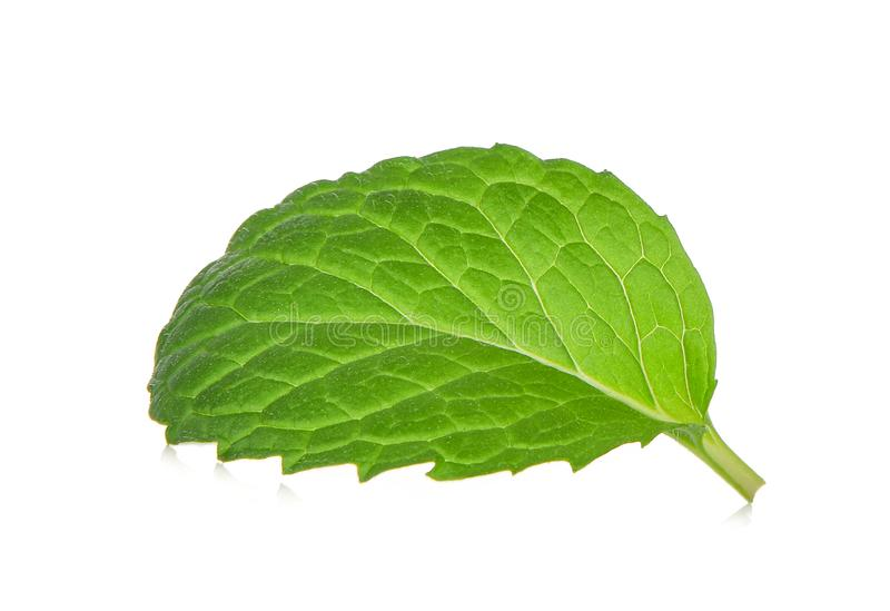Single fresh mint leaf isolated on white stock image