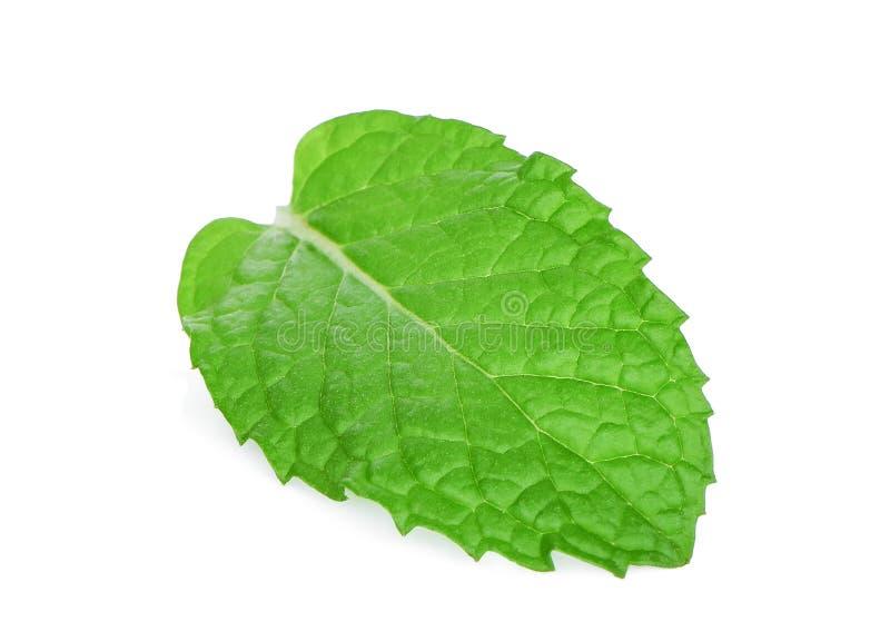 Single fresh mint leaf isolated on white stock images