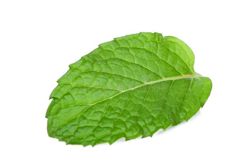 Single fresh mint leaf isolated on white royalty free stock images