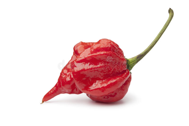 Download Single Fresh Red Scorpion Chili Pepper Stock Image - Image of variety, white: 64564739