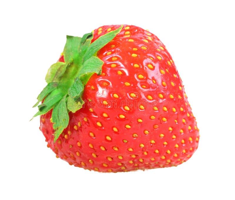 Single fresh red strawberry stock photo