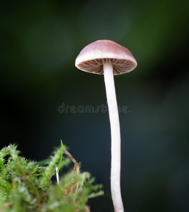 Single Fungi. Low angle view of wild fungi growing in a dark corner of woodland stock photos