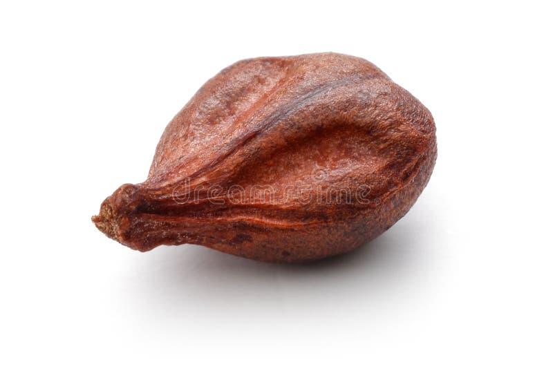Single grape seed on white background stock image