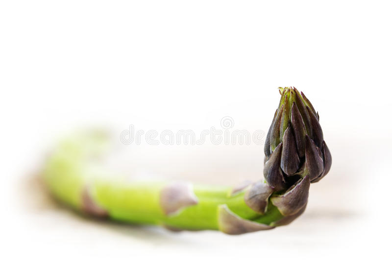 Single green asparagus, macro shot on a light background fading royalty free stock image