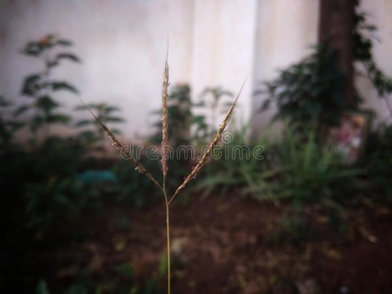 Single green grass stock image
