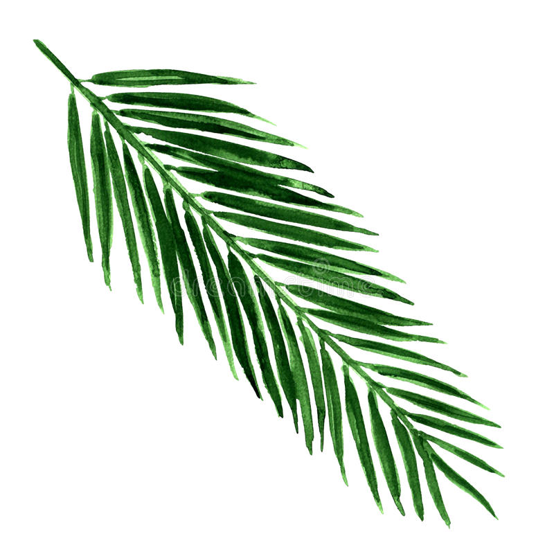 Single green palm leaf isolated. Watercolor painting on white background vector illustration