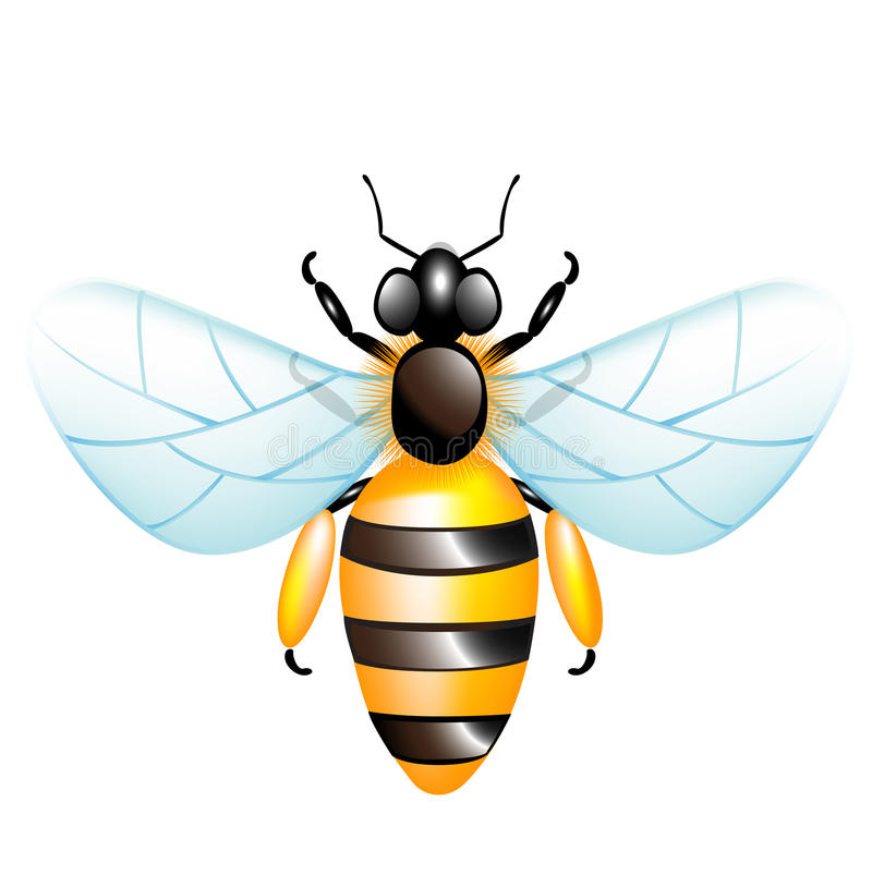 Download Single honey bee stock vector. Image of flavor, natural - 26302835