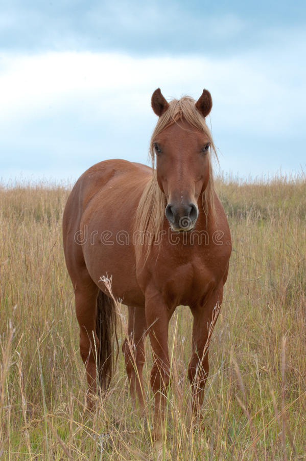 Download Horse In Tall Grass Royalty Free Stock Image - Image: 29846086