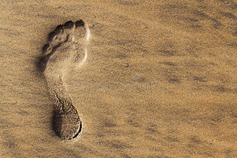 Single human barefoot footprint of left foot in brown yellow sand beach background, summer vacation or climate change concept. Copy space stock image