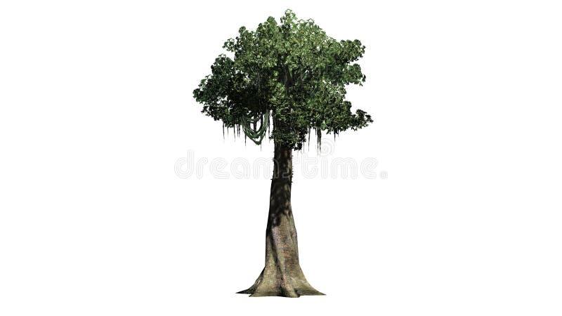 Kapok tree - isolated on white background. Single Kapok tree in front on a white background royalty free stock images
