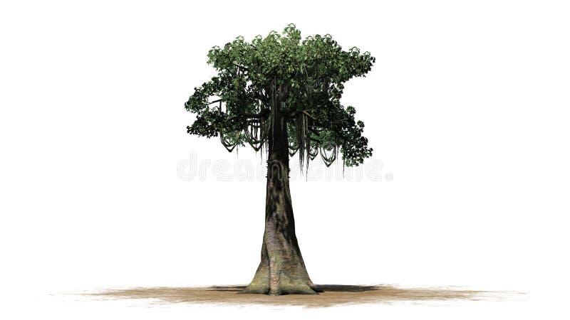 Kapok tree - isolated on white background. Single Kapok tree in front on a white background stock images