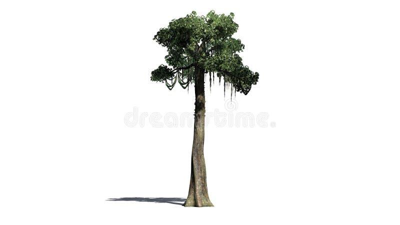 Kapok tree - isolated on white background. Single Kapok tree in front on a white background stock photography