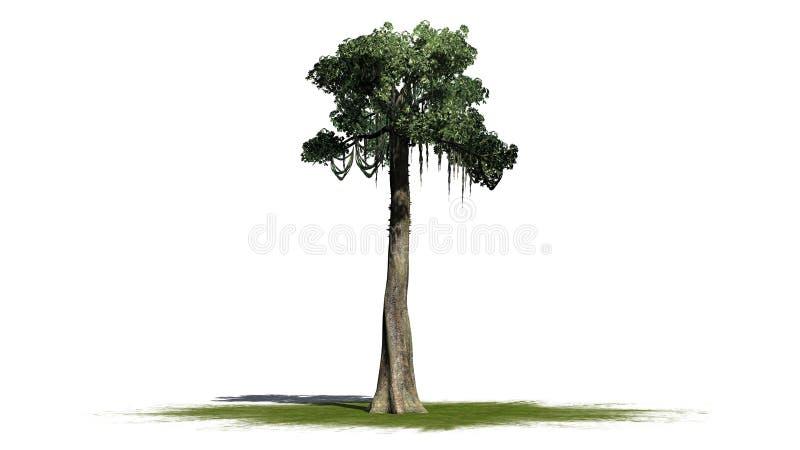 Kapok tree - isolated on white background. Single Kapok tree in front on a white background stock photos