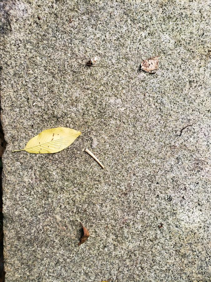 Single leaf on concrete pathway close-up texture shot. Gray and yellow royalty free stock image