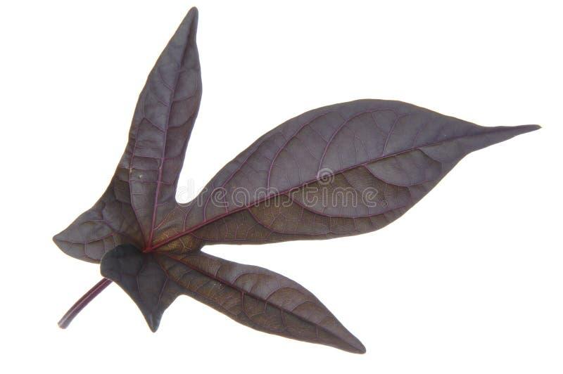 Single leaf stock image