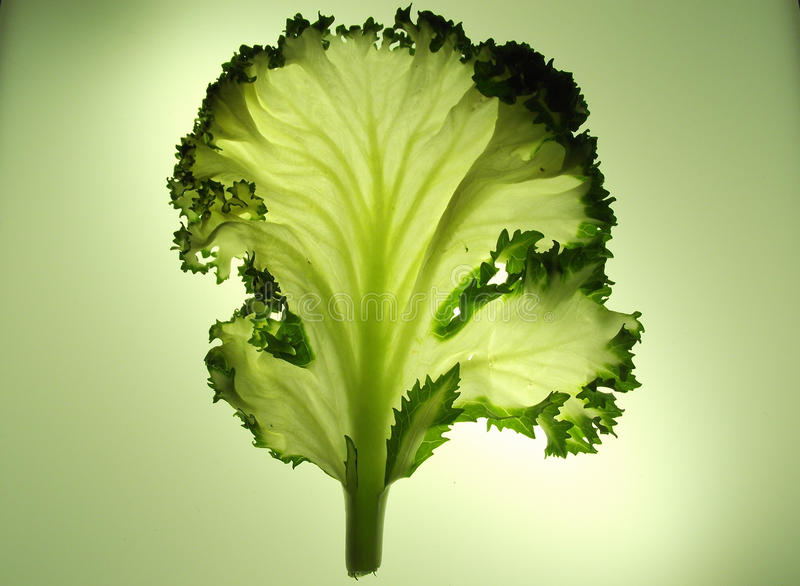 A single leaf of kale or cabbage lettuce stock photos