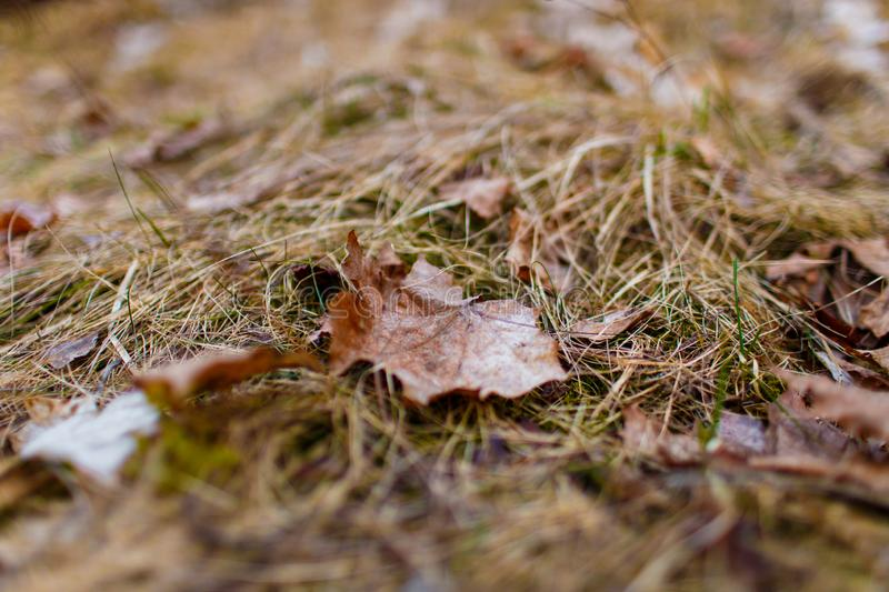 Single leaf lying on dried grass close-up royalty free stock photo