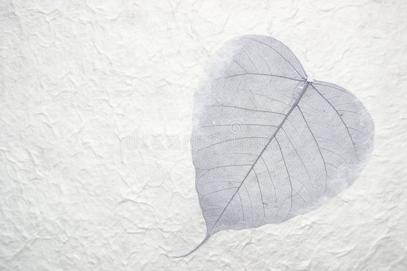 Single leaf in paper royalty free stock image