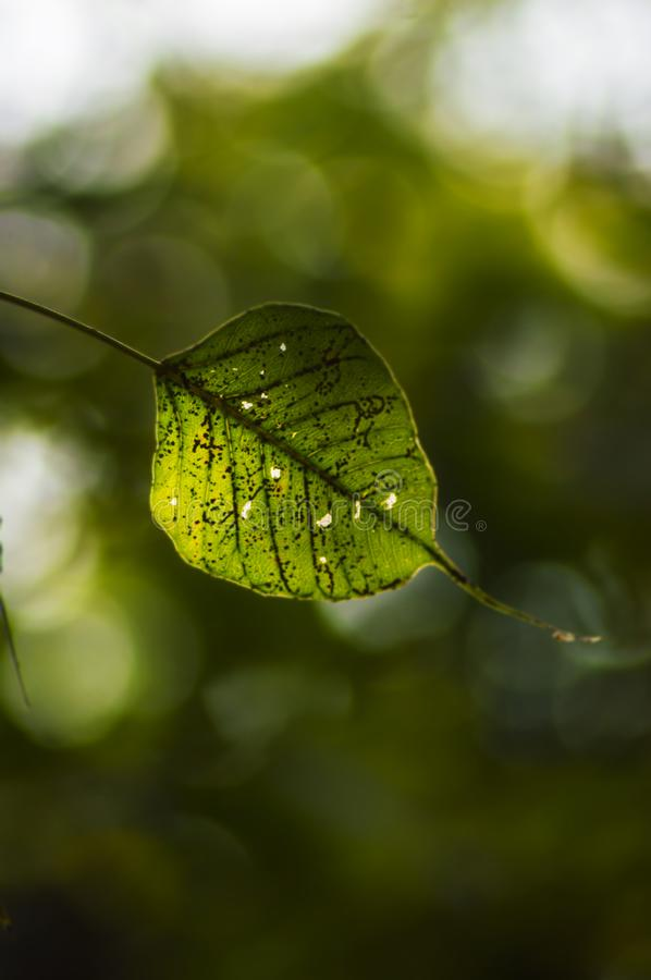 The single leaf! stock images