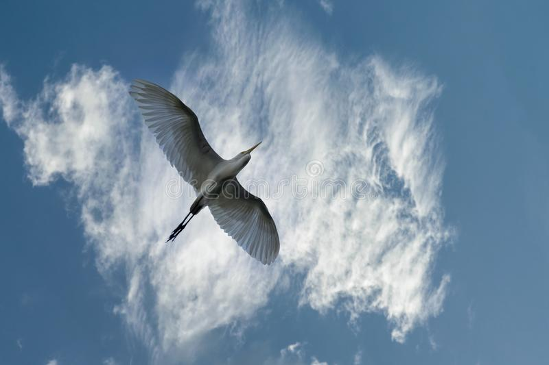 Single lonely bird and colorful cloudy sky. Single bird is flying under the colorful cloudy sky which is amazing royalty free stock images