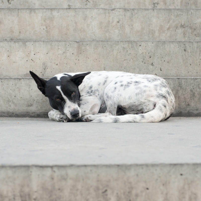 Single lost strayed dog on street royalty free stock images