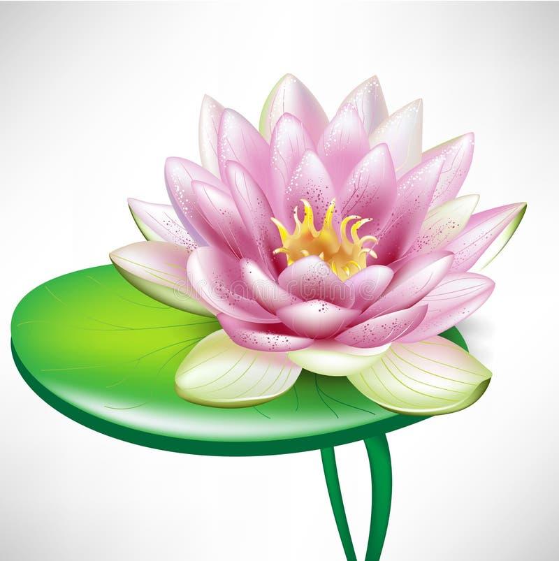 Single lotus flowers on leaf stock illustration