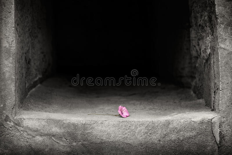 Single magenta flower in a stone alcove. Single pink flower offering placed in a dark stone alcove royalty free stock images