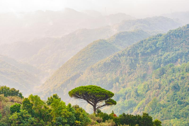 Single mediterranean pine tree growing on the top of the hill. Evergreen trees forests filling the gradient mountain range royalty free stock photography