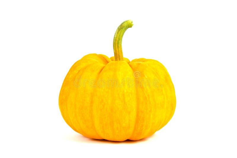 Single mini pumpkin royalty free stock photo