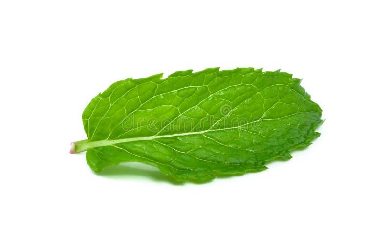 Single mint leaf isolated on white background royalty free stock photo