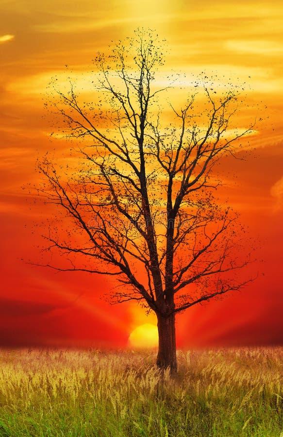 Single oak tree stock image
