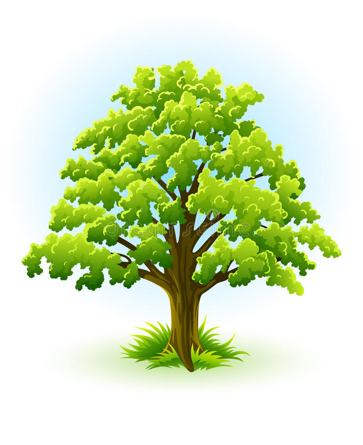 Single oak tree with green leafage stock illustration