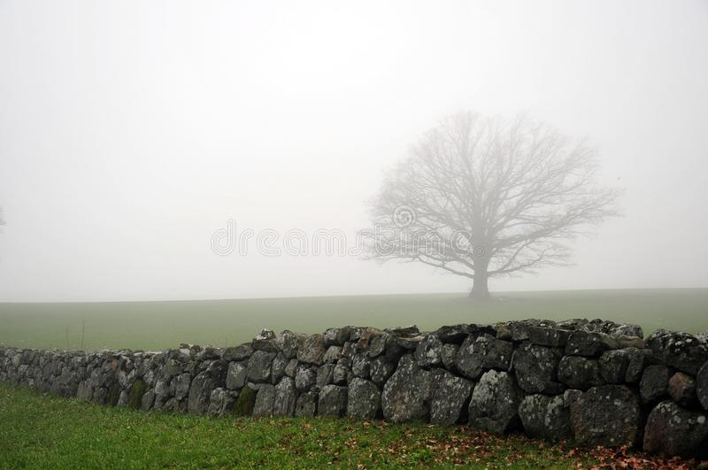 Oak Tree in Mist Behind Stone Fence royalty free stock images