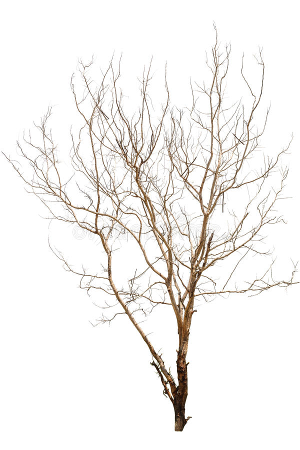 Single old and dead tree stock image