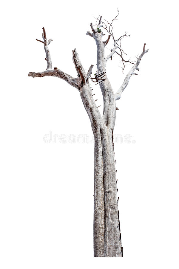 Single old and dead tree isolated on white background with close vector illustration